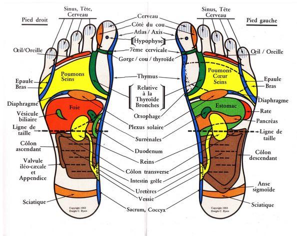 carte des pieds reflexologie plantaire la carte des points reflexes sur le pieds avec la réflexologie